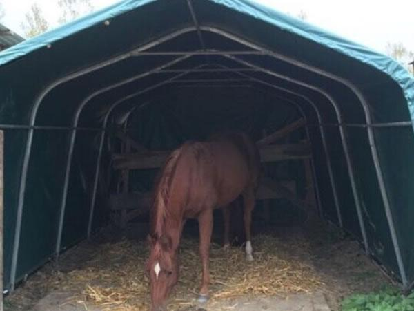 Carpas para caballos naves para caballos xinli for Criadero de carpas
